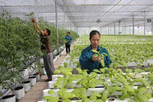Phát triển HTX nông nghiệp kiểu mới: Sớm khơi thông những 'điểm nghẽn'