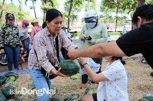 'Giải cứu' 5 tấn dưa hấu bị ảnh hưởng dịch nCoV