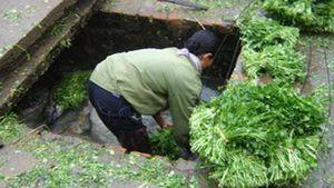 Một hộ kinh doanh rau tại Lâm Đồng bị phạt 75 triệu vì gây ô nhiễm