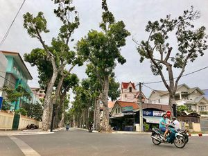 Vì sao phải đốn ngọn, hạ cành cây cổ thụ ở các tuyến phố?