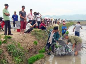 Triển vọng mô hình cánh đồng 'một giống' ở Điện Biên