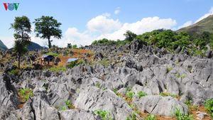 Khám phá vẻ đẹp kỳ thú của cao nguyên đá Tủa Chùa, Điện Biên