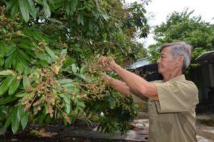 Hành trình chinh phục thiên nhiên của lão nông đưa trái ngọt về rừng U Minh, làm du lịch như chuyên gia