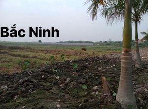 Bắc Ninh: Dự án Khu dân cư xã Xuân Lâm rao bán đất khi chưa xong thủ tục đầu tư