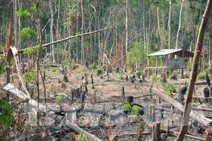 Gia Lai: Kiểm điểm trách nhiệm các tập thể, cá nhân để mất hàng nghìn ha rừng