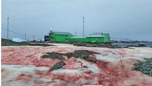 Sững sờ cảnh 'tuyết máu' ở Nam Cực