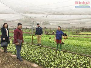 Gia Lâm: Nông dân phấn khởi vì giá rau sạch tăng cao