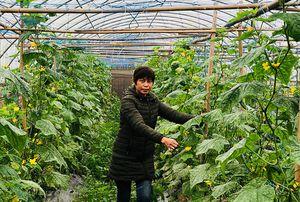 Nữ tỷ phú trồng rau sạch