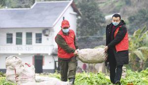 Nông dân Trung Quốc trắng tay vì phong thành