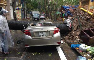 Hà Nội: Cây cổ thụ bật gốc đổ trong trận mưa lớn, đè bẹp rúm ô tô