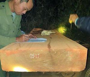 Lại phát hiện cả đoàn xe của 'lâm tặc' rầm rộ vận chuyển gỗ lậu ra khỏi rừng