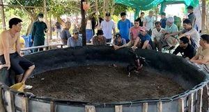 Tụ điểm đánh bạc núp bóng chọi gà truyền thống trên đảo Trí Nguyên