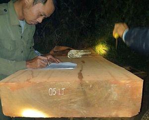 Lực lượng bảo vệ rừng mật phục, bắt giữ 12 xe chở gỗ lậu