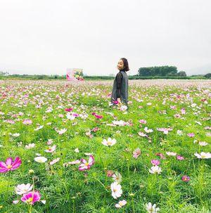 Đông Triều quy hoạch vùng trồng hoa với du lịch