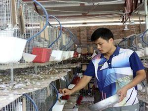 Tuổi trẻ Bắc Giang khởi nghiệp làm giàu