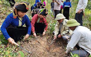 Ðiện Biên chuyển đổi cơ cấu cây trồng trên đất kém hiệu quả