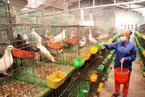 Sóc Sơn thúc đẩy kinh tế trang trại