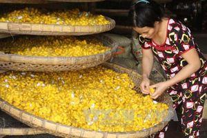 Hỗ trợ, khôi phục làng nghề nghề truyền thống