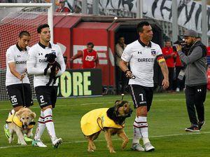 Đội bóng nổi tiếng Chile dắt chó ra sân làm linh vật