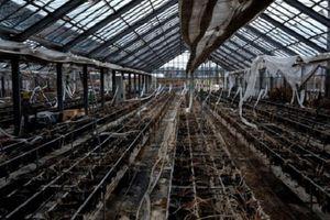 Cận cảnh Fukushima 9 năm sau thảm họa động đất, sóng thần