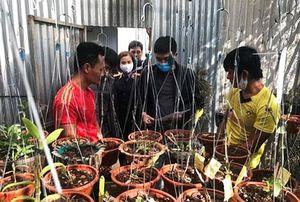 Khởi tố nhóm đối tượng trộm vườn lan 4,5 tỷ đồng khiến chủ vườn ngã quỵ