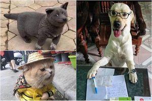 Dân tình điểm mặt loạt thú cưng vừa xuất hiện đã trở thành 'idol mạng'