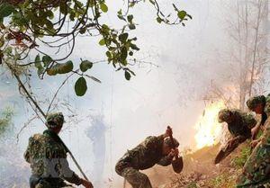 Nguy cơ cháy rừng cao tại ĐBSCL trong cao điểm mùa khô
