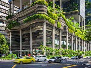 Tản mạn về cây xanh đô thị