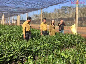 Đắk Lắk: Vườn ươm cây giống Dương Gia vào vụ mới