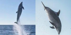 Cá heo đột biến hưng phấn tung người phóng lên khỏi mặt nước 6 mét