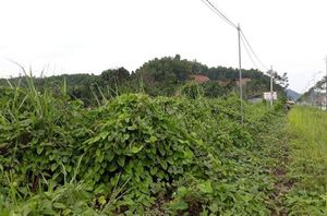 Yên Bái: Mua đất đấu giá, hơn 3 năm chờ đợi vẫn chưa được bàn giao sử dụng