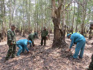 Triển khai quyết liệt các biện pháp phòng cháy, chữa cháy rừng
