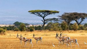 Thiên nhiên hoang dã ở Kenya