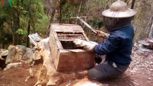 Ông Chớ có thu nhập từ mô hình nuôi ong tự nhiên lấy mật