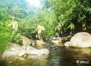 Nhiều người dân Phú Lộc bẫy bắt động vật hoang dã ở rừng Bà Nà