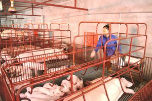 Phát triển cơ giới hóa nông nghiệp: Ưu tiên các sản phẩm lợi thế