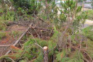Lâm Đồng: Xử phạt hai đối tượng phá rừng lấy đất làm nương rẫy