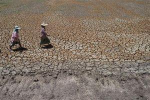 Thái Lan đối mặt hạn hán trầm trọng, nguy cơ thất nghiệp tăng cao