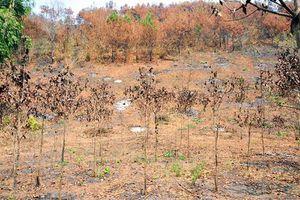 Bị kiểm điểm vì cháy 17 ha rừng nhưng 10 ngày mới báo cáo