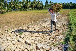 Cần 515 tỷ đồng hỗ trợ gấp để khắc phục hạn mặn
