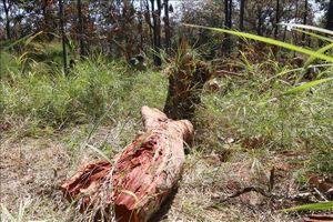 Điều tra, làm rõ vụ khai thác gỗ trái pháp luật ở Gia Lai