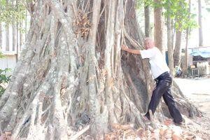 Độc đáo những vườn cây 100 tuổi