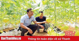 Toàn tỉnh gieo trồng được hơn 800 ha dưa các loại