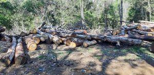 Lợi dụng dự án để phá rừng