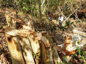 Truy quét nạn phá rừng ở khu vực giữa tỉnh Đắk Lắk và Gia Lai