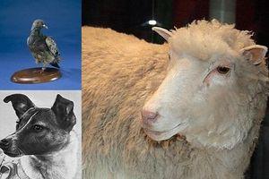 Điểm danh những con vật từng có đóng góp to lớn trong lịch sử nhân loại