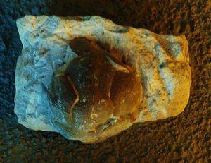 Phát hiện sinh vật ngoài hành tinh 80 triệu tuổi dị thường sống trên Trái đất