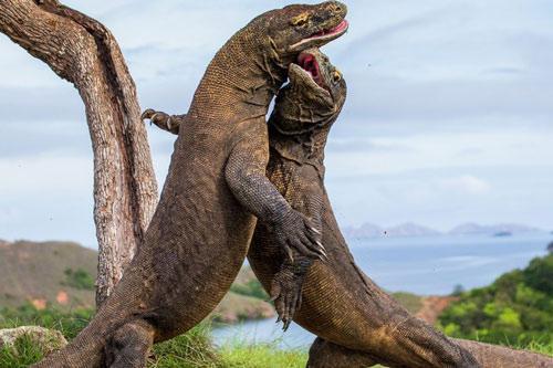 Kỳ công săn ảnh động vật hoang dã ở những điểm nguy hiểm nhất thế giới