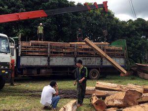 Các đối tượng trong đường dây vận chuyển gỗ trái phép ở Gia Lai lĩnh án tù