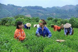 Sơn La: Hỗ trợ doanh nghiệp khắc phục khó khăn do dịch
